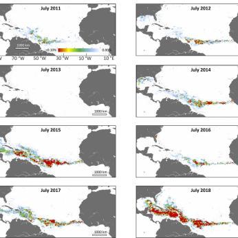 sargassum_chart